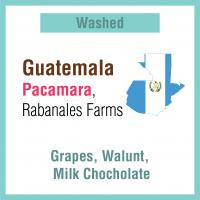 Guatemala Rabanales Farm Pacamara
